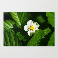 Wild Strawberry Flower Canvas Print by Digital2real