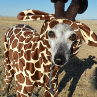 Petite Giraffe Pet Costume- have your own tiny lap giraffe -size MEDIUM Italian greyhound 16 inches long