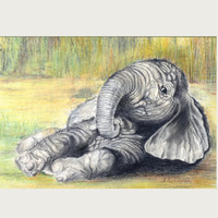 Portrait drawing, baby elephant, original drawing, home decor, nursery art,