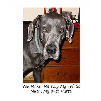 Catty Cards Greeting Cards.  Blue the Great Dane Wagging Tail Because He Loves You Blank Card. Say I Love You To Friends and Family. Dog