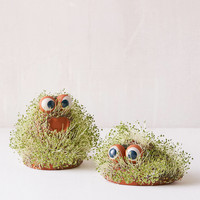 Lil Blob Friend Chia Pet | Urban Outfitters
