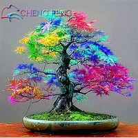 20 pcs packing Japanese Rainbow Maple Seeds Rare Color and Beautiful Plants tree Seed for Garden Decoration Bonsai Diy plant pot