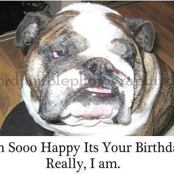 Catty Cards Greeting Cards. Brutus the Bulldog Wishes You a Happy Birthday. Blank Greeting Card for Bday. Dog Card for Wishing Happy Day