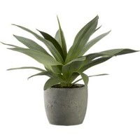 Large Potted Succulent