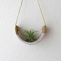 Hanging Air Plant Cradle - Small