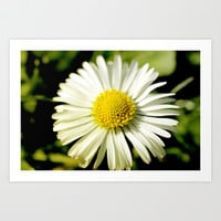 Daisies Art Print by LoRo  Art & Pictures