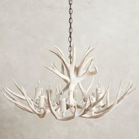 Shed Antler Chandelier by Anthropologie in White Size: One Size Lighting
