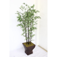 Tall Bamboo Tree | Wayfair