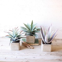 Large Artifical Succulents In Square Pots (Set of 3)