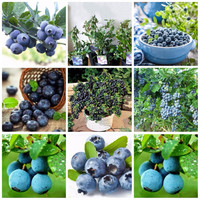 5 Kinds of Categories Purple Blueberry Seed Windowsill Roof Fruit Seed Potted Bonsai Tree Plant Vaccinium Seed a Pack 200 Pcs