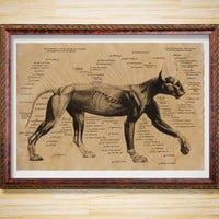 Cat decor Anatomy poster Animal print