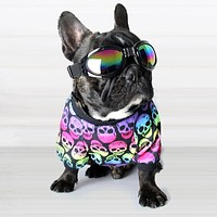 🐱💀🐶💀 Skull Print Clothes for Small Pets