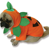 Pumpkin Pooch Dog Costume