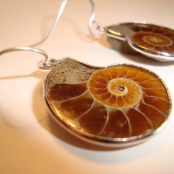Ammonite Fossil Earrings,  Sea Fossil Silver Earrings with Sterling Silver Ear Wires - Natures Artistry - Natural Design