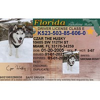 Florida Pet ID