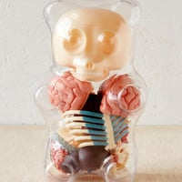 Anatomical Gummi Bear Puzzle Kit - Urban Outfitters