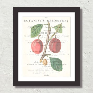 Vintage Plum Collage No. 6 Canvas Print