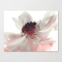 Anemone Stretched Canvas by Ally Coxon
