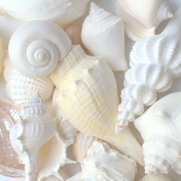 Beach Wedding White Seashell Mix - Home Decor Nautical Ocean Life Natural Eco - Bulk Sea Shell Reception Party Decor- Crafting