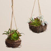 Hanging Succulent Nests Set of 2