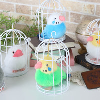 Birds in a Cage!! Waiting for Someone to Release