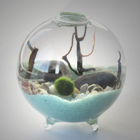 Marimo Terrarium - Miniature aquarium with living Japanese moss ball - footed vase with sand, pebbles, sea shells and black sea fan