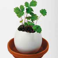 Urban Outfitters - Eggling Crack & Grow Plant