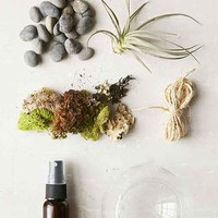 Makerskit DIY Air Plant Terrarium Kit