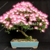 bonsai Albizia Flower seeds called Mimosa Silk Tree ,seeds for flower potted plants, 20 pieces/bag