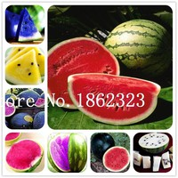20 Pcs Rare Watermelon Seed Fruit Seeds, Giant very big watermelon, sprouting rate 95%,edible Vegetable seed bonsai plant