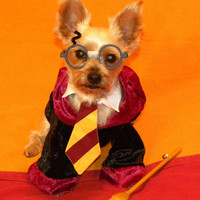 Harry Pawter Dog Costume ALL SIZES AVAILABLE