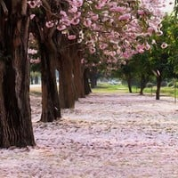 Pink Leaves Printed Photography Backdrop / 2179