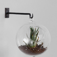 Hanging Double-Bubble Glass Terrarium
