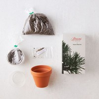 Bonsai Grow Kit | Urban Outfitters