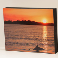 Dolphin at Sunset Wall Panel - 8x10 Photo Standout, Fine Art Photography, Ready to Hang Wall Decor, Beach Decor from Seabrook Island, SC