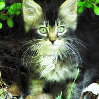 Cat Photography, Animal Photography, Cat Lover,  Kitten, Nature Photography, Print Photography, Wall Art
