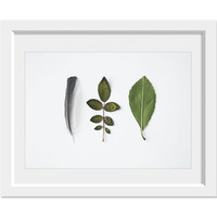 Leaves and Feather. 8x10. Fine Art Photographic Natural History Print. Minimalist. Natural Home Decor. Indoor garden botanical.