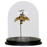 Fantasy Insect with Timepiece