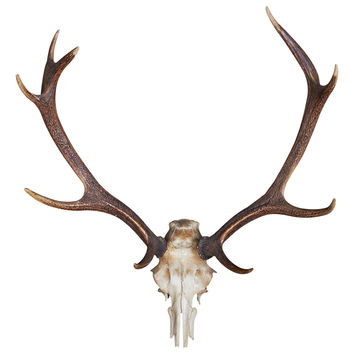 Deer Antlers Wall Decal
