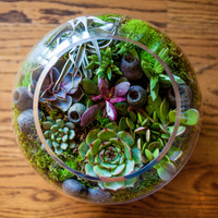 Succulent terrariums created and delivered right to your door. No assembly required.