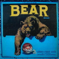 Bear Brand - Vintage Citrus Crate Label - Handmade Recycled Tile Coaster