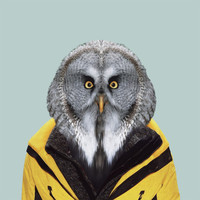 subject matter   Photographic art at its best — Zoo Portrait : Owl (edition of 100)