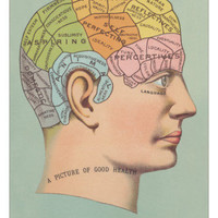 Phrenology Chart of Head Posters at AllPosters.com
