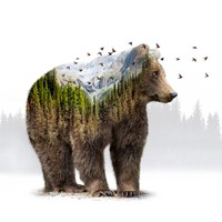 Wild I Shall Stay | Bear Art Print by Soaring Anchor Designs | Society6