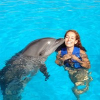 dolphin swimming - Google Search