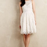 Pina Lace Dress by