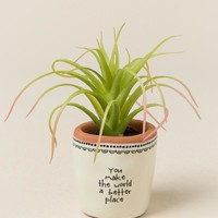 You Make the World a Better Place Mini Succulent