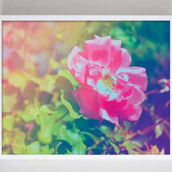 Photography Print Floral Pink Rainbow Home Decor Flower Photography Nature Photo Garden Photography Fine Art