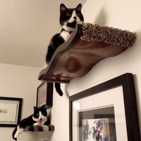 Large Floating Wavy Cat Shelf / Cat Perch