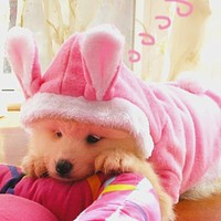 Christmas Easter Bunny Pet Dog Costume Clothes